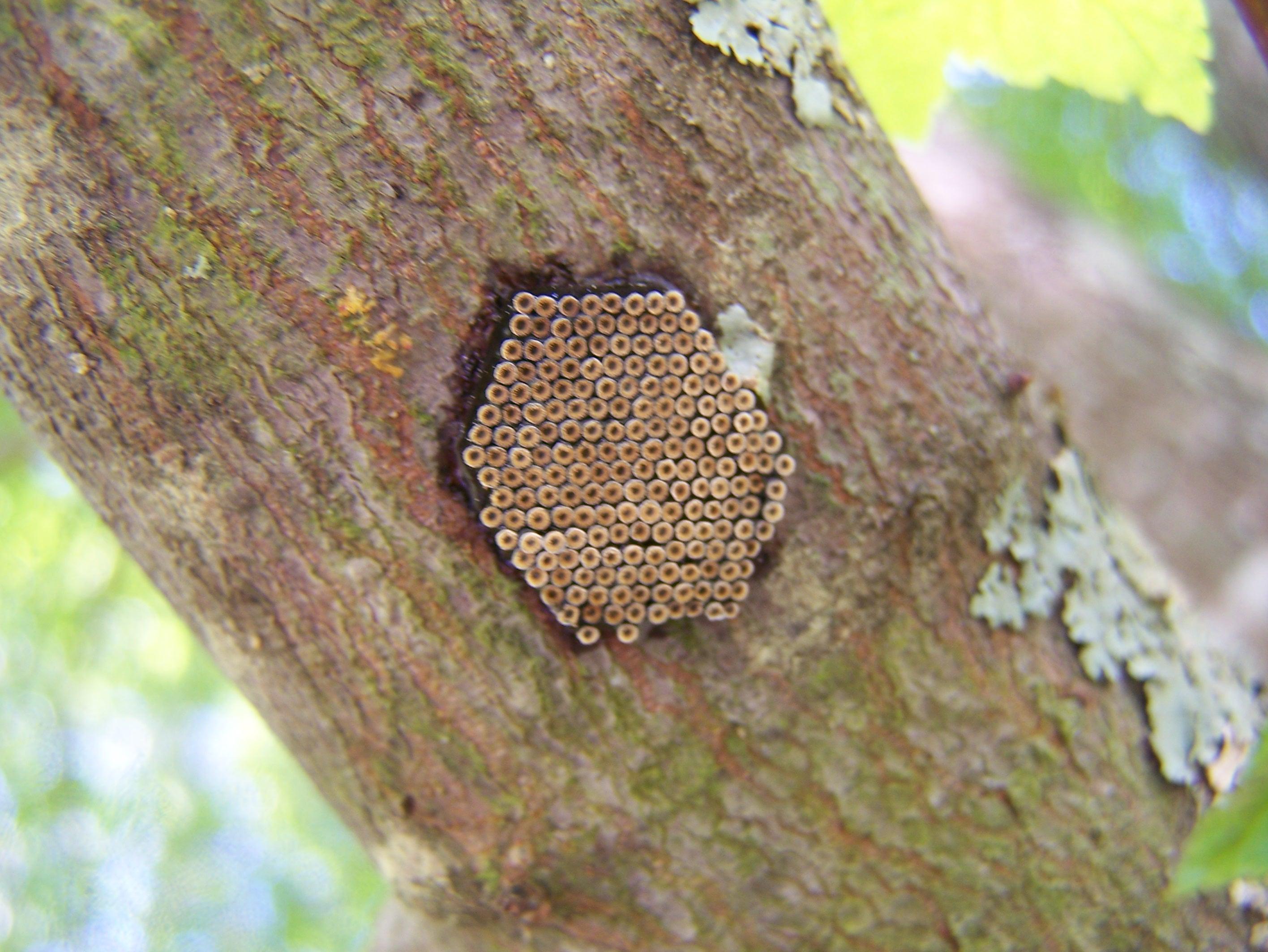 Praying Mantis Eggs Spring Creation...